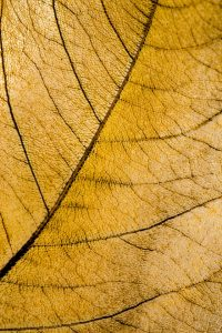 image of a yellow leaf