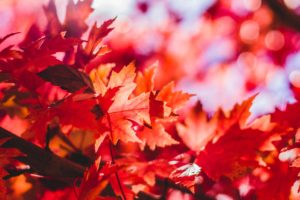 [ID red autumn leaves] How to Pay Attention, for Writers