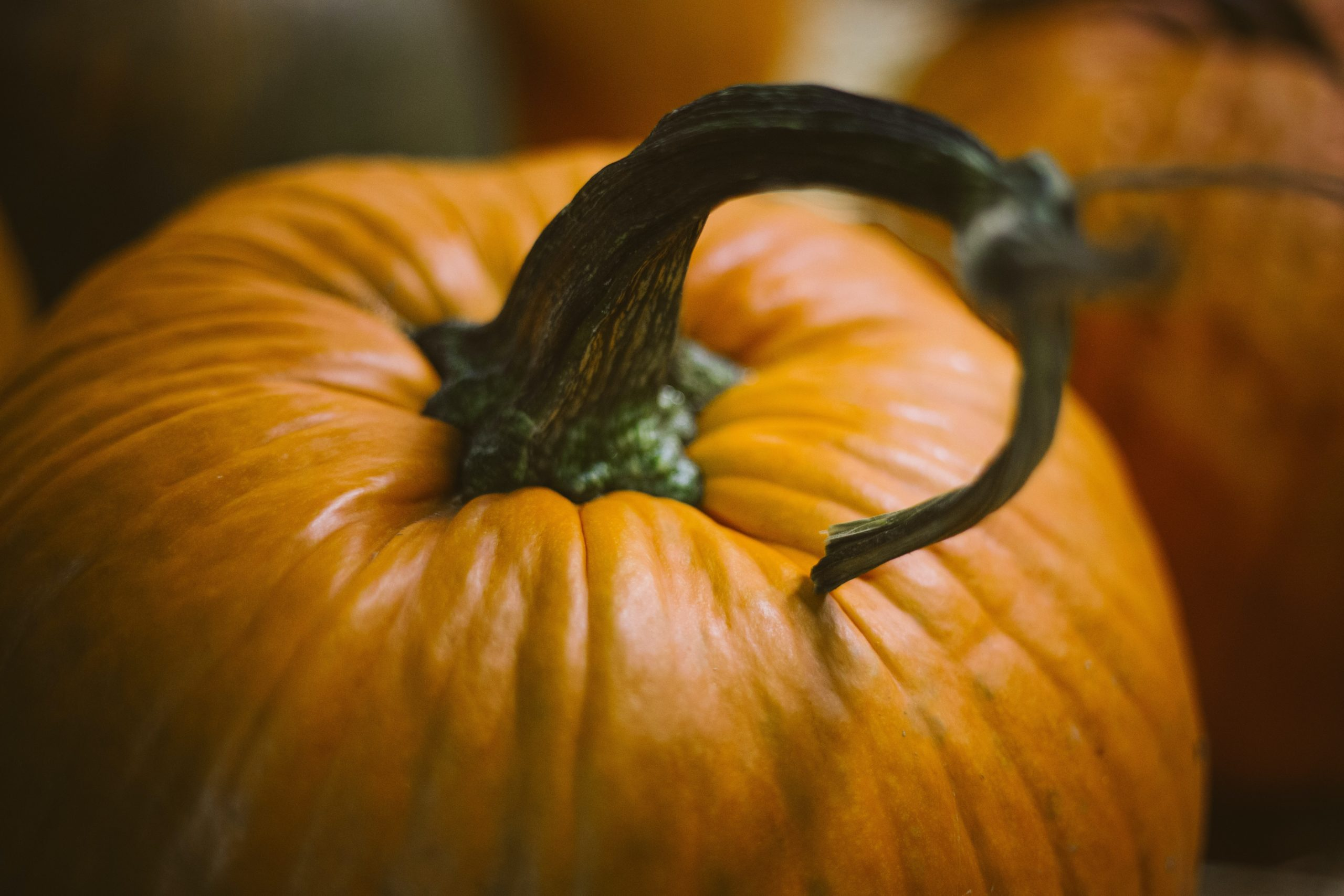orange pumpkin with a curly stem, Thanksgiving